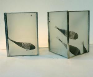 photophores poissons